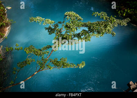 A branch of a tree bathed in sunlight hangs over the milky blue water of the Rio Celeste, Costa Rica. - Stock Photo