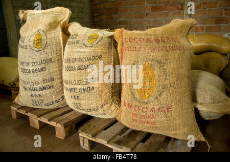 Cocoa beans packed in sacks for export at warehouse at plantation in Ecuador - Stock Photo