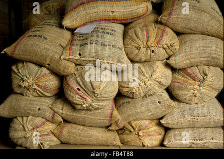 Cocoa beans packed in sacks for export at warehouse - Stock Photo