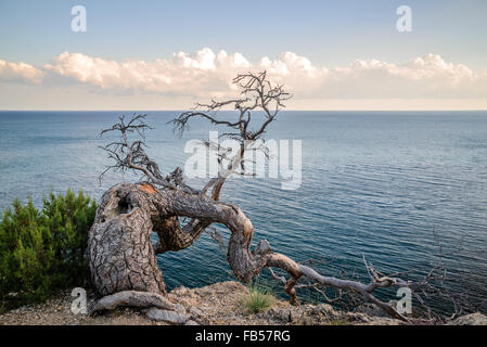 Lonely dry tree at the edge of rocky cliffs on the background of blue sea - Stock Photo