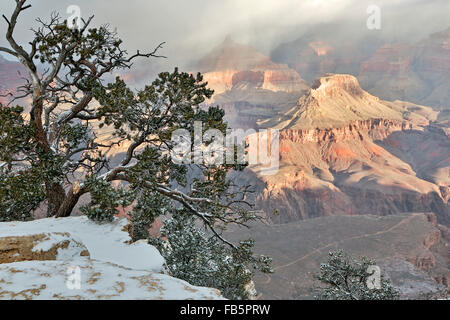 Snow-covered tree, bluffs and canyons, from Rim Trail near Yavapai Point, Grand Canyon National Park, Arizona USA - Stock Photo