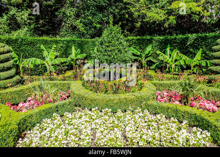 Hedging and topiary in Queen Mary's Gardens in Regents Park, London, UK - Stock Photo
