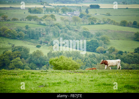 BBC Music day 'for the love of music'  Hadrian's Wall of Sound 2015 at view from Banks East in Cumbria is the best - Stock Photo