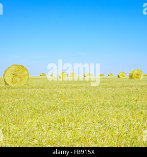Hay rolls on horizon, blue sky and yellow field in summertime. - Stock Photo