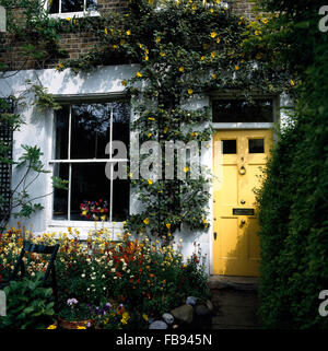 Exterior of Victorian terraced house with a yellow front door and a Fremontodendron on the walls - Stock Photo