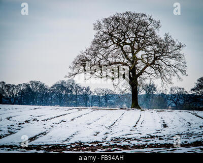 Oak tree silhouetted against a stormy sky across a snow-covered field at Lymm, Cheshire - Stock Photo
