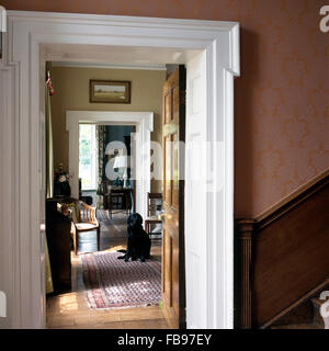 Traditional country hall with view through open door of black Labrador dog sitting in drawing room - Stock Photo