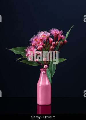 Elegant bouquet of vivid pink Eucalyptus flowers in a pink vase isolated on black background - Stock Photo