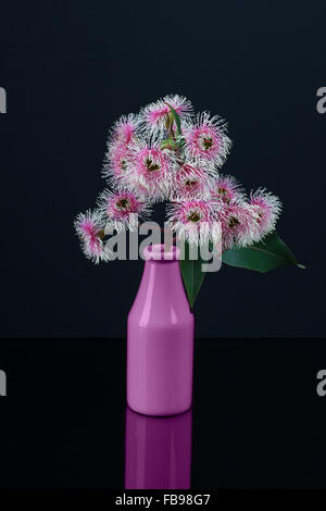 Elegant bouquet of white pink Eucalyptus flowers in a purple bottle isolated on black background - Stock Photo