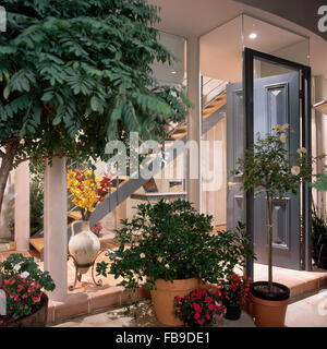 Lush green plants and a standard rose tree in pots outside a modern house with glass walls and view of hall and - Stock Photo
