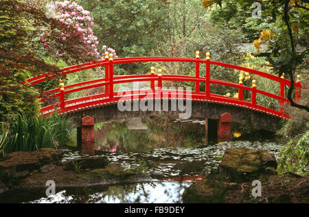 red japanese style bridge over stream in woodland in a large country garden in spring