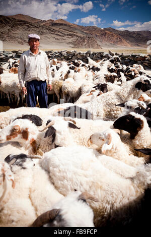 A herder corralling his sheep for drenching in remote far-western Mongolia. - Stock Photo