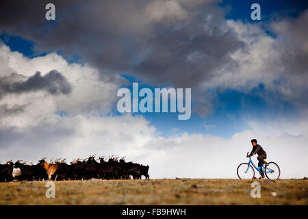 A boy rounds up his family's animals in the Tsaast Uul valley, western Mongolia. - Stock Photo