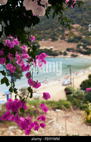 Purple bouganvillea flowers with view over Atheras beach bay, Kefalonia, Greece - Stock Photo