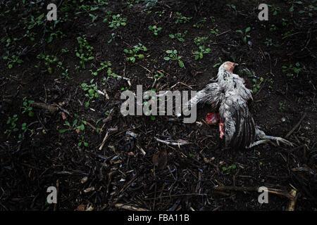 Sweden, Dead bird lying on soil - Stock Photo