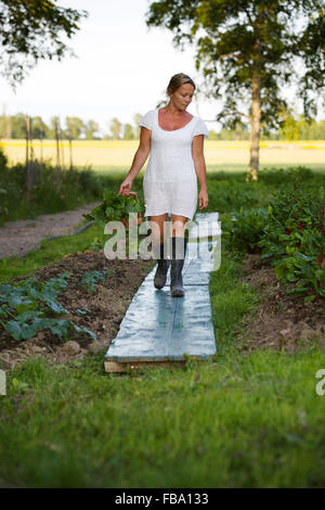 Sweden, Ostergotland, Mature woman harvesting vegetables - Stock Photo