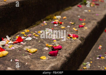 Flower petals on stone steps after a wedding - Stock Photo