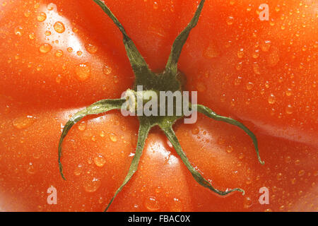 Fresh and plump beefsteak tomato close up on center stalk - Stock Photo