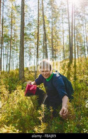Finland, Keski-Suomi, Jyvaskyla, Young man harvesting blueberries - Stock Photo