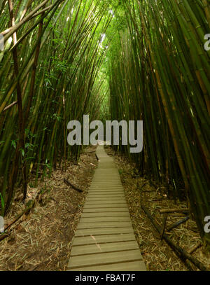Bamboo forest along the Pipiwai Trail in Haleakala National Park - Stock Photo
