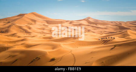 Camel trek through Saharan Dunes, Erg Chebbi Morocco - Stock Photo