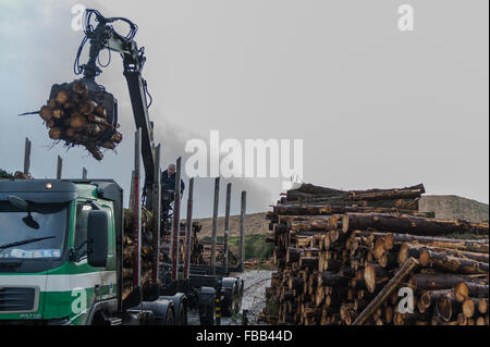 Ballydehob, Ireland. 13th Jan, 2016.  The driver of a log carrying truck from Brosnan Haulage loads Sitka Spruce - Stock Photo