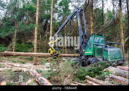 Ballydehob, Ireland. 13th Jan, 2016.  A Coillte owned John Deere 1270D Harvester fells another conifer in Ballydehob - Stock Photo