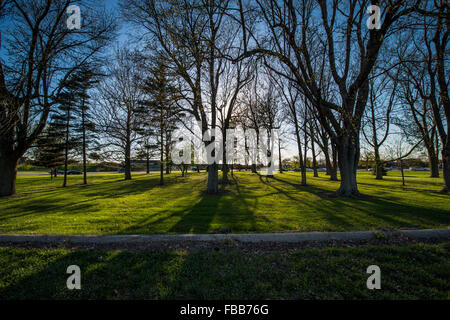 Wide angle shot of trees casting shadows in afternoon on a spring day - Stock Photo