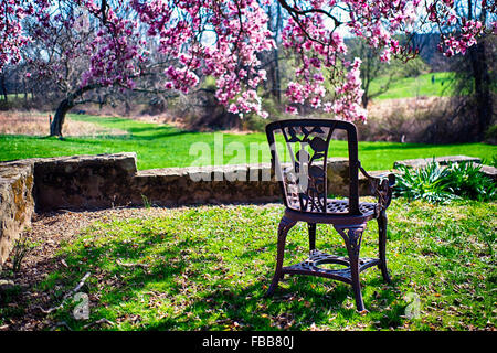 Close Up View of an Antique Chair in a Garden Under a Blooming Magnolia Tree, Readington, Hunterdon County, New - Stock Photo