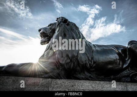 Lion statue at base of Nelson's column, Trafalgar Square - Stock Photo