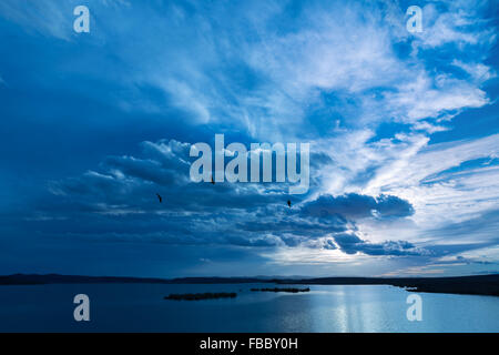 Birds flying against dark cloudy sky over water. - Stock Photo