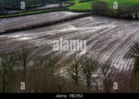 View of Muddy, Waterlogged Fields in the Torridge River Valley with Tractor Tyre Patterns. Torrington, Devon. - Stock Photo