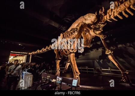 (160114) -- NEW YORK, Jan. 14, 2016 (Xinhua) -- People visit the 'Titanosaur' skeleton exibition in the American - Stock Photo