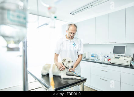 Vet examining dog in veterinary practice, Austria - Stock Photo