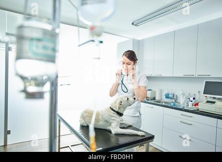 Vet examining dog in veterinary practice, Austria - Stock Photo