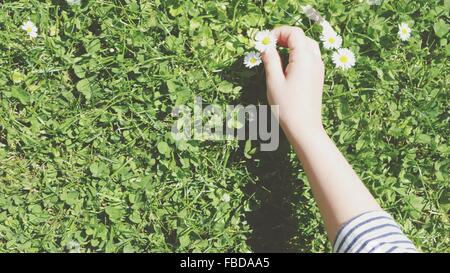 Cropped Image Of Woman Holding Daises On Field - Stock Photo