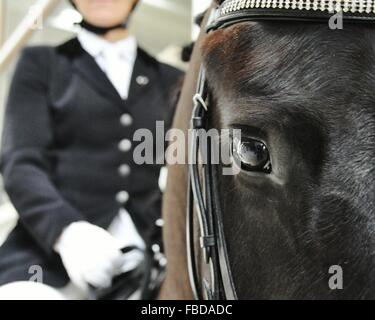 Close-Up Of Man Sitting On Horse - Stock Photo