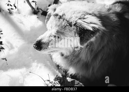 Close-Up Of Dog Standing On Snow - Stock Photo