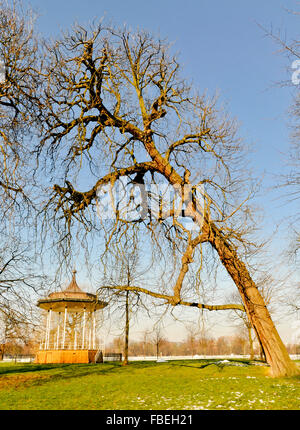 Leaning Horse Chestnut Tree over Bandstand in Kensington Gardens - Stock Photo