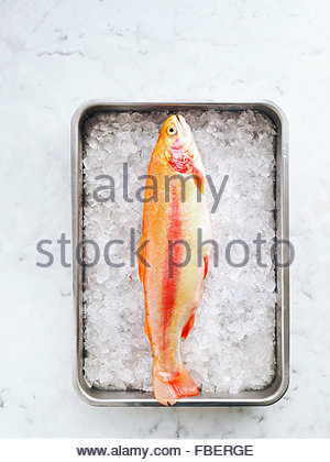 Golden rainbow trout in a pan with ice on marble table - Stock Photo