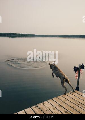 High Angle View Of Weimaraner Jumping Over Lake Against Sky - Stock Photo