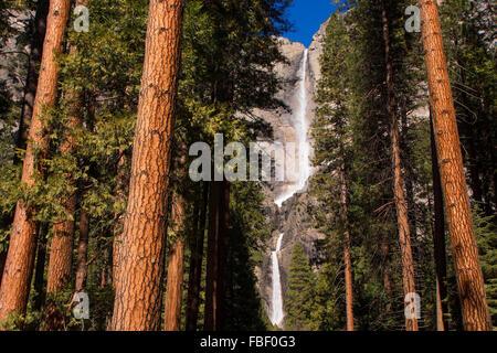 Yosemite falls and redwoods - Stock Photo