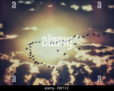 Low Angle View Of Silhouette Birds Flying Against Dramatic Sky - Stock Photo