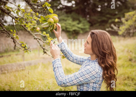 Farmer woman touching apple - Stock Photo
