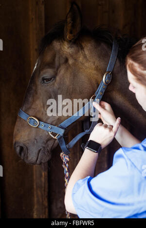 Female vet adjusting reigns - Stock Photo