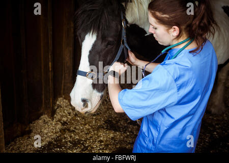 Vet examining horse in stable - Stock Photo