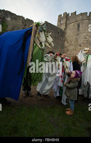 Chepstow, Wales, UK. 16th January 2016. A record ten 'Mari Lwyds' (Welsh), or Grey Mare's gather for celebrations - Stock Photo