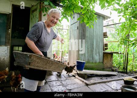 Woman farmer feeding chicken flock at a private rural farm in Ukraine - Stock Photo