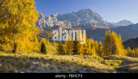 Monte Cristallo, larches, Cortina d'Ampezzo, Veneto, the Dolomites, Italy - Stock Photo