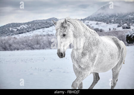 White Horse in snow with mountain in background - Stock Photo